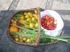 Finca el Quinto, Los Realejos, Tenerife. Organic fruit basket http://www.organicholidays.co.uk/at/2709.htm