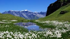 nature_switzerland_lakes_alps_meadows_white_flowers_1366x768_69.jpg (1366×768)