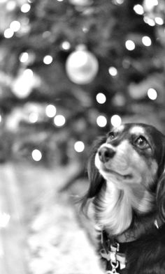 ~ black & white Christmas bokeh ~