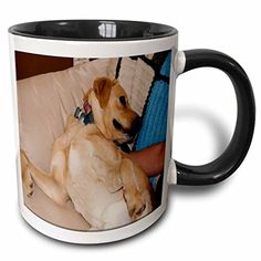 Jos Fauxtographee Realistic - Loving Hand on The Tummy of Large Blonde Pet Dog Laying on its Back Getting Rubs from Its Owner - 11oz Two-Tone Black Mug (mug_49461_4) 3dRose http://www.amazon.com/dp/B01351A2N0/ref=cm_sw_r_pi_dp_jBOXwb1GHPAYX