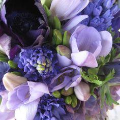 freesia & mascari (grape hyacinth)