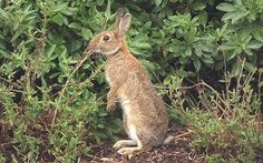 Bunny hugging' Government scraps rabbit control measures - Telegraph