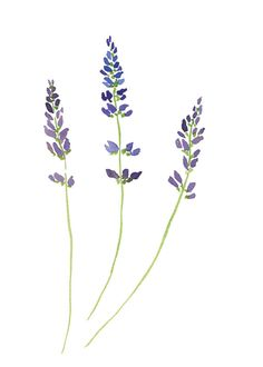 Lavender Watercolor 5 x 7 Print by leanneshunney on Etsy