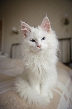 poes in white