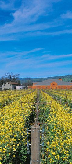 Mustards Grill in Napa Valley will always be the hub of the food and wine community where winemakers lunch with truckers and chefs come to dine on their night off.