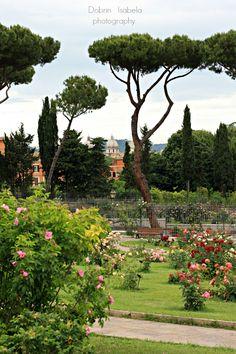 Rose Garden. Rome, Italy.