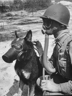 *Andreas Feininger Soldier and German Shepard Wearing Gas Masks for Chemical Warfare Maneuvers Military Working Dogs, Military Dogs, War Dogs, Gas Mask Art, Gas Masks, Ww2 Photos, War Photography, Chernobyl, World War One