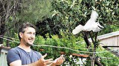 Posta güvercinleri geri mi dönüyor? Çocukluğundan beri güvercinlere ilgi duyan Süleyman Okaymirza, özellikle balık tutmaya gittiği yerlerde cep telefonu çekmemesi halinde eşiyle posta güvercinleri sayesinde haberleşiyor. Detaylar ajanimo.com #ajanimo #ajanbrian #hayvan #animal #güvercin