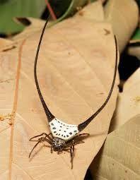 Resultado de imagen para Ravine Trapdoor Spider