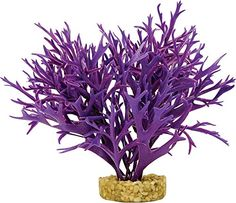 Blue Ribbon Pet Products ABLCB2008PP Water Fern Plant for Aquarium Large Purple -- You can get additional details at the image link.Note:It is affiliate link to Amazon.