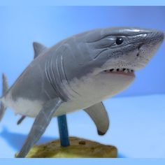 Make your own shark.   making