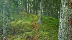 Matkailualan asiantuntija patistaa suomalaisia matkailuyrittäjiä leikkimielisyyteen ja toteuttamaan absurdiltakin tuntuvia ajatuksia. Esimerkiksi hiljaisuuden ja luonnon tuotteistamisessa on vielä tekemistä. Kymmeniä vuosia on jo pohdittu, miten keskieurooppalaiset turistit saataisiin kesällä pohjoiseen.