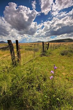 The fence in the pasture (South Africa)