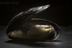 https://flic.kr/p/yBASgE | still life: Mussel | Nikon D7100 + Sigma 105 mm macro