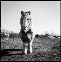 Sanctuary: Portraits of Rescued Farm Animals (this is Rainy, Resident of SASHA Farm)