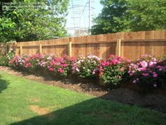 rose garden layouts for florida | PlantFiles Pictures: Shrub Rose 'Knock Out' (Rosa) by jess2132000