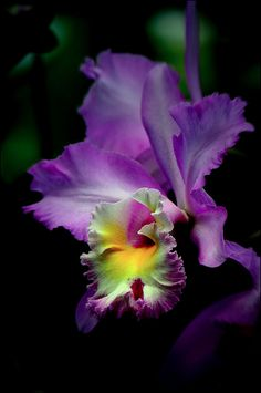 purple orchid: Photo by Photographer John Nell