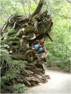 Mount Rainier National Park, Washington (c)travelincousins.com