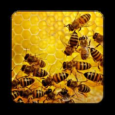 Cover art Productivity Management, Productivity In The Workplace, Productivity Growth, Productivity Quotes, Google Play, Android, Cover Art, Book, Beekeeping