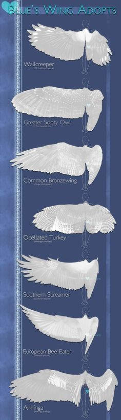 Trendy Ideas For Bird Wings Drawing Illustration Design Reference