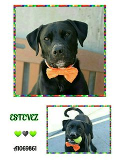 AVAILABLE @NYCDOGS.URGENTPODR.ORG