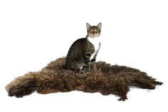 Cat Bed Cruelty Free Felted Wool Fleece Rug Pet Bed by WraptCats