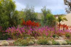 Native plants in a low maintenance, drought-tolerant garden by Boor Bridges Architecture, Gardenista