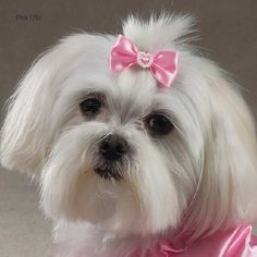 Aria Lucy Bows for Dogs 2-Packs | Best for Bride