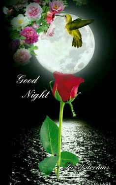 Good Night sister and yours ,have a peaceful sleep,God bless.xxx❤❤❤✨✨✨