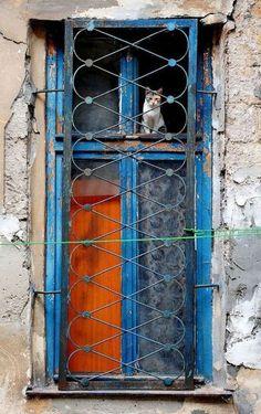 ❤️  =^.^= CÅt§ in The Window ♥