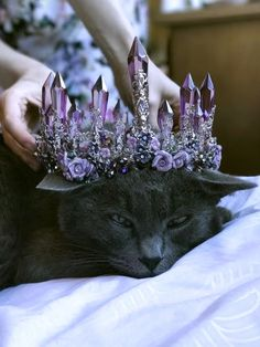 Amazing purple and black crystal goth tiara Crown Aesthetic, Witch Aesthetic, Crazy Cat Lady, Crazy Cats, Cute Jewelry, Hair Jewelry, Jewellery, Animals And Pets, Cute Animals