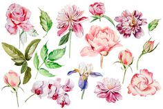 Beautiful watercolor flowers by knopazyzy on Creative Market Creative Illustration, Floral Illustrations, Peony Flower, Flower Art, Watercolor Flowers, Watercolor Paintings, Color Tattoo, Flower Tattoos, Spring Flowers