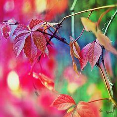 美しい真っ赤な葉