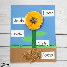 activities may include art projects, science experiments, snack preparation, crafts, . this is a fun science experiment for your children. Flower Activities For Kids, Science Projects For Kids, Science Crafts, Spring Activities, Science For Kids, Flower Craft Preschool, April Preschool, Kindergarten Activities, Preschool Activities