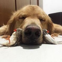 um-cachorro-oito-passarinhos-e-um-hamster-são-os-amigos-mais-incomuns-5