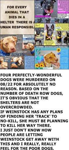 SENSELESS MURDERED by NYCACC