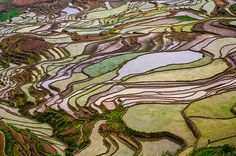 the remote, secluded and little known rice terraces of yuanyang county in china's yunnan province were built by the hani people along the contours of ailao mountain range five hundred years ago....