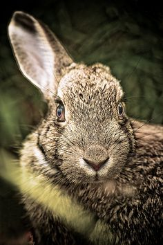 rabbit - looking at you! | Flickr - Photo Sharing!