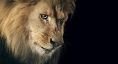Le photographe Tim Flash à réalisé ces superbes portraits d'animaux