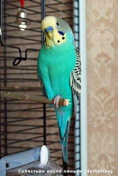 http://img-fotki.yandex.ru/get/5701/parrots-ru.3/0_418b7_6a2d9c0e_XXL.jpg