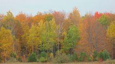 Fall,in Spruce,Michigan