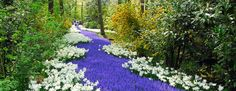 TK in her GARDEN: A post in which Russell Page goes to Keukenhof ...