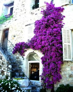 Wow. Bougainvillea love.