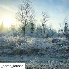 Waouh - Les lumières d'hiver sont superbes dans le Saint-Quentinois ❄️🌞❄️Superbe photo by @_barbe_rousse #jaimesaintquentin #saintquentin #stquentin #stq #aisne #jaimelaisne #picardie #espritdepicardie #hautsdefrance #hautsdefrancetourisme #paysage #lumiere #hiver #hiver❄ #magiedhiver #nostalgie #remember #magie #magique