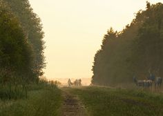 Impression of the landscape design by Vollmer & Partners for a natural burial site near Grolloo (Drenthe).