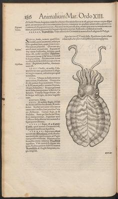 Nomenclator aquatilium animantium. - Biodiversity Heritage Library Octopus Art, Fantastic Beasts