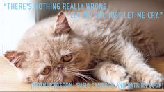 Sad Cat Diary is a deep and personal look into sad cats lives as they share their thoughts in this poignant Dear Diary journal entries that express their feline feelings. Neko, Cat Diary, Cat Crying, World Cat, Sad Cat, Cat Whisperer, F2 Savannah Cat, Cat Facts, Cat Gif