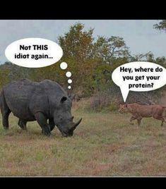 Hahaha true! Herbivorous animals need the same nutrients as carnivorous ones
