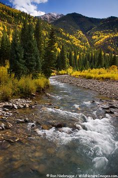 Fall colors along the Henson Creek Road and Engineer Pass in the San Juan Mountains, Colorado