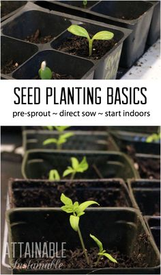 If you're planting a vegetable garden, you'll need to decide if you're planting seeds or seedlings. Here's a look at how to save money and get started early by planting seeds.